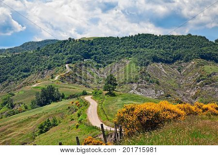 Apennine mountains in Forli-Cesena, Emilia Romagna, Italy: landscape of the green hills with flowering broom, dirt road, woods and pastures