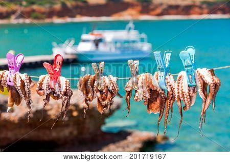 Drying The Octopus In The Sun In The Seaside Village Of Plaka On The Island Of Crete