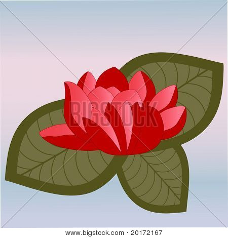 water lilly vector