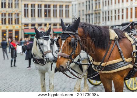 Horses on Grote Markt square in Brussels Belgium - travel background