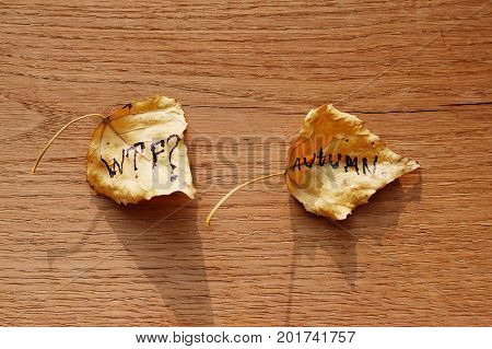 Withered Leaves With Wtf Inscription And Autumn On An Old Wooden Background With Cracks