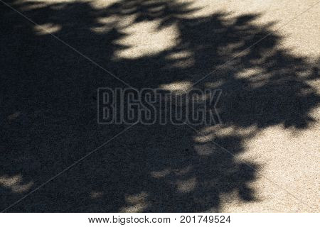 Gaps in the tree leaves act as a pinhole camera creating unique crescent shaped light pattern in the shadows on concrete path during the 2017 solar eclipse.