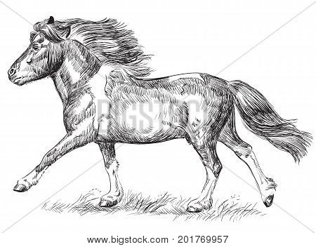 Vector hand drawing pony galloping in black color isolated on white background
