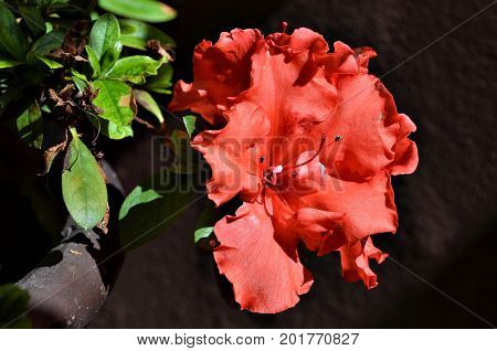 Beautiful red flowers in the garden on a beautiful sunny day in Minas Gerais, Brazil.