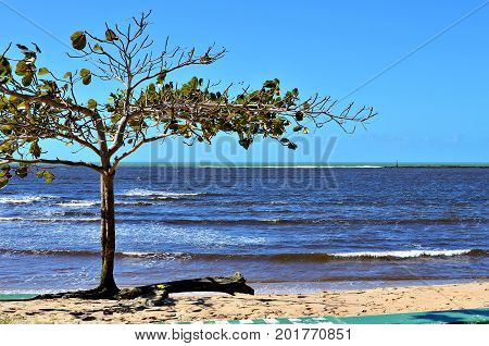 Beautiful almond tree by the sea with a multicolored sea in the background. Coral reefs protecting the beach and the harbor entrance of the city of Porto Seguro, Bahia, Brazil.