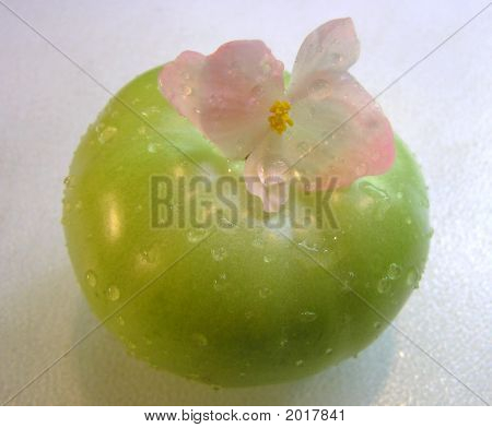 Green Tomato with Delicate Pink Flower on it