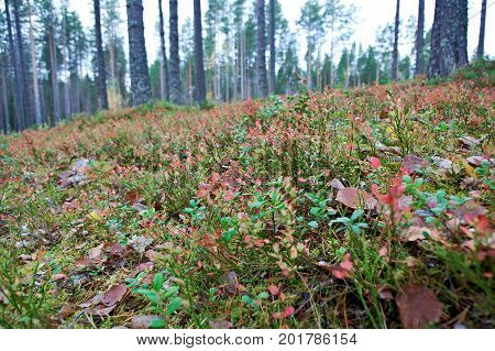 autumnal dense forest landscape. Deep Taiga Forest.Russia