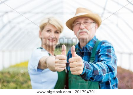 Gardeners standing in a nursery greenhouse showing thumbs up. Professional and cheerful gardening experts.