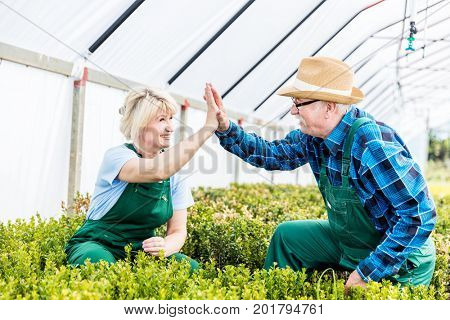 Successful gardeners team doing high five gesture at work in a greenhouse. Work concept.