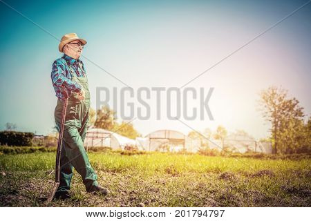 Senior gardener standing with a shovel in the garden. Sunny summer day. Gardening and agriculture. Vintage mood