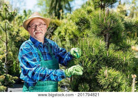 Senior gardener cutting a tree in a garden. Cheerful senior worker. Active retirement