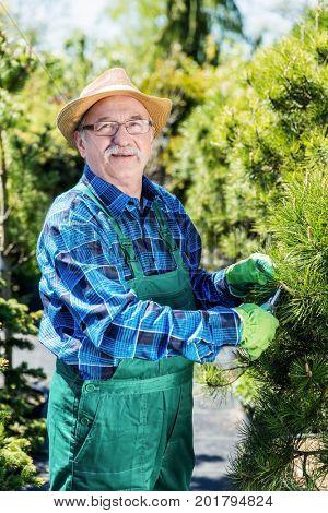 Senior gardener cutting a tree in a garden. Gardening and work.