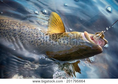 Brook Trout Caught On Rotating Spinner