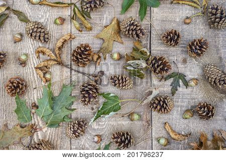 Crunchy Curled Autumn Leaves, Acorns, Pine Cones And Needles Scattered On Rustic Wooden Board Backgr