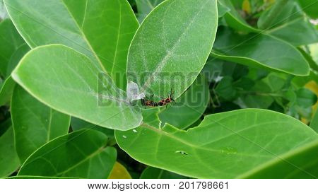 insect, grasshopper, grass, mushrooms, ant, snail, fishing, lunch, rice, fried squid, fish, fisherman, animal, water, cat, sea, ocean, snorkeling, swimming, ship, tour,   travel, journey, tour and travel, vacation, refreshing, hobby, outbound, landscape,