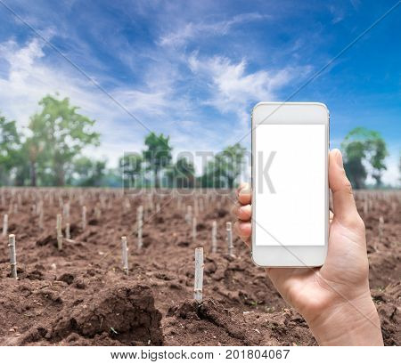 Female hand holding mobile smart phone taking photo Closeup of start cultivation Cassava or manioc plant field at Thailand