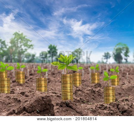 stack of gold coins with seed on the start cultivation Cassava or manioc plant field business investment concept,3D illustration