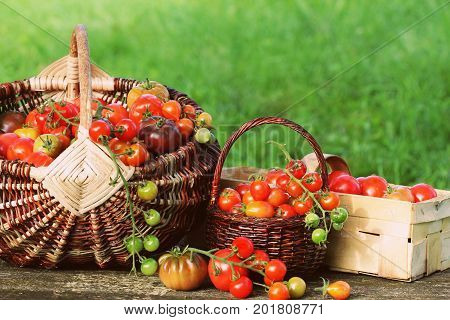 Heirloom variety tomatoes in baskets on rustic table. Colorful tomato - red, yellow , orange. Harvest vegetable cooking conception .