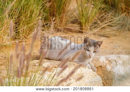 Small homeless cat is lying in a grass