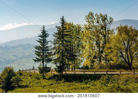 Trees On Serpentine On Autumn Day