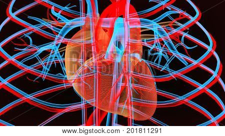 Male anatomy of human circulatory system in x-ray. 3d render