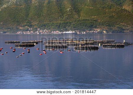 Oyster production in Boka Kotorska Bay, Montenegro