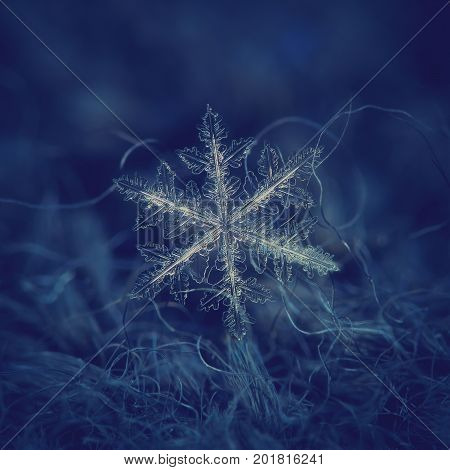 Real snowflake at high magnification. Macro photo of large stellar dendrite with fine hexagonal symmetry, complex structure, elegant shape and six long, bright arms with transparent side branches.