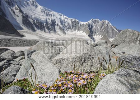 Foothill Of Beluha Mountain. Altai.