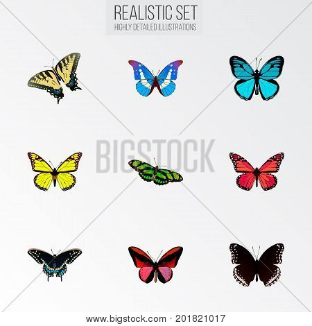 Realistic Green Peacock, Archippus, Sky Animal And Other Vector Elements