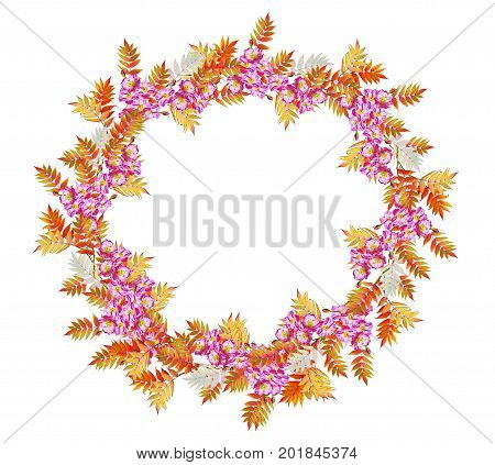 Bright colorful autumn foliage isolated on white background. rosehips