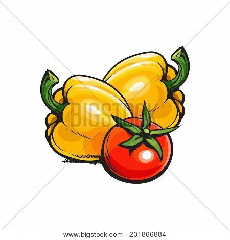 Fresh whole ripe red tomato and two yellow bell pepper vegetables, sketch style vector illustration on white background. Realistic hand drawing of whole ripe red tomato and yellow bell peppers