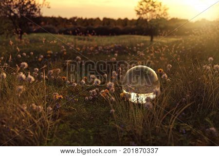 3d rendering of flower meadow and glass ball in the evening sunshine