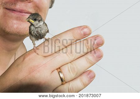 Young chickwoman Sparrow on a man's hand. Isolated background