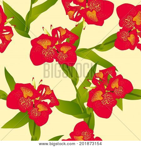 Red Canna indica - Canna lily, Indian Shot on Beige Ivory Background. Vector Illustration.