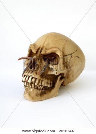 A Death Head