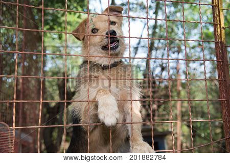 Abandoned dog who lives behind a iron fence in dog's shelter