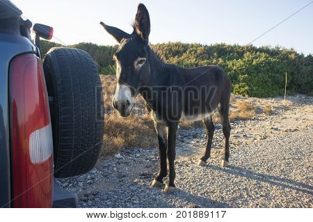 funny donkey looking at the camera, Cyprus, Karpaz National Park Wild Donkey Protection Area