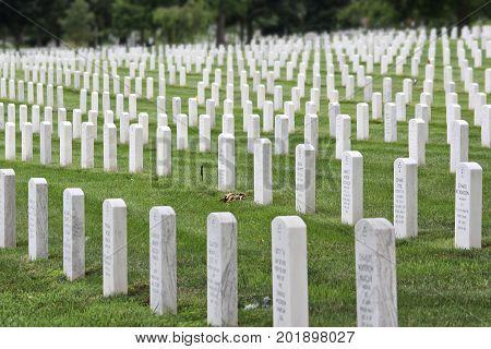 Arlington Military Cemetery