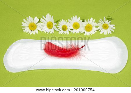 Hygiene conception photo. Medicinal chamomile flowers and red feather on the menstrual pad. Menstruation sanitary woman hygiene for blood period. Woman critical days gynecological menstruation cycle