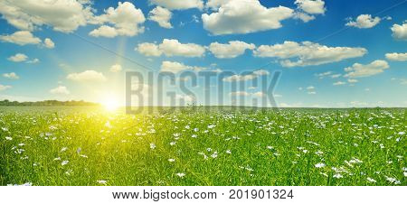 field with flowering flax and sunrise on blue sky