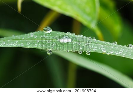 Dew drops on grass fresh leaves are available in nature