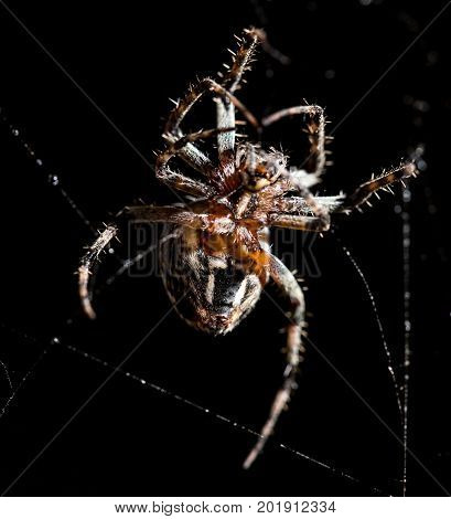 The spider sits on a web on the hunt .