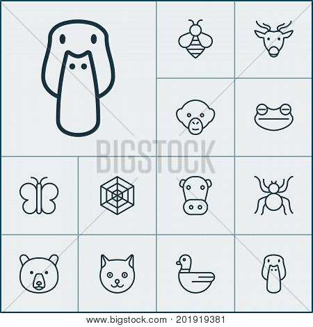 Zoology Icons Set. Collection Of Kine, Cobweb, Kitten And Other Elements