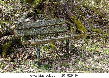 A Rotting Bench In The Middle Of The Woods