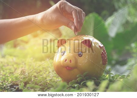 Hand drop the coin into piggy bank for saving money and success tax season