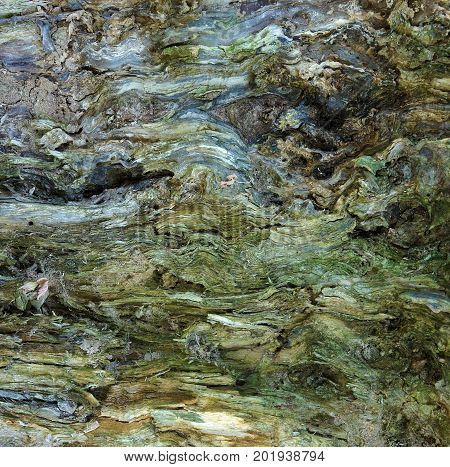 Impressionism as a result of nature activity - an abstract picture is obtained on the surface of a rotten tree trunk