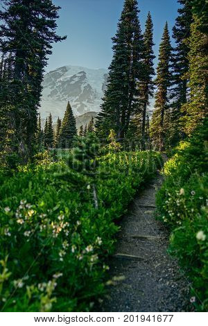 This is the picture of trail leading to the mountian at Mount Rainier National Park Washington.
