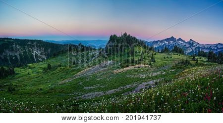 This is the picture of mountain and wildflowers during sunset at Mazama Ridge at Mount Rainier National Park Washington.