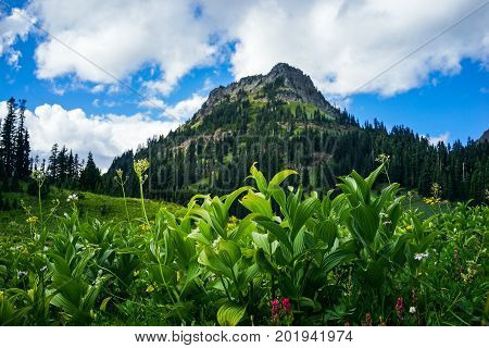 Mountain With Blue Sky And Green Grass And Lake