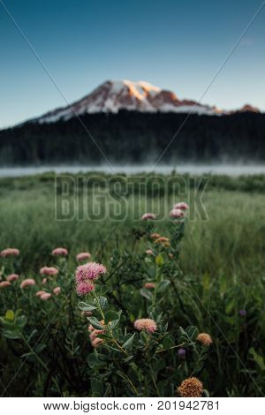 Mt Rainier And Wildflowers At Reflection Lakes Sunrise